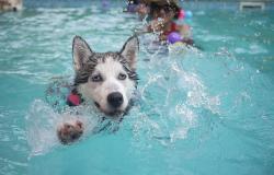 Vacanze sul lago di Garda con il cane, sì o no?