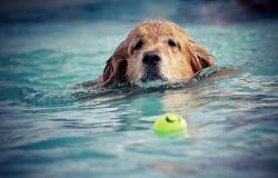 Vacanza sul lago di Garda con il cane: la struttura, la spiaggia e le attività