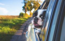 Vacanza con il cane sul lago di Garda: attività da fare