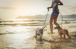 La vostra vacanza sul lago di Garda con il cane